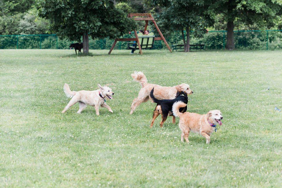 Bark & Run