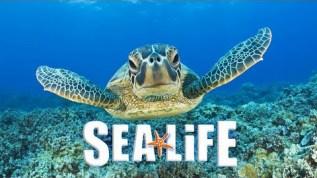 SEA-LIFE-PORTO