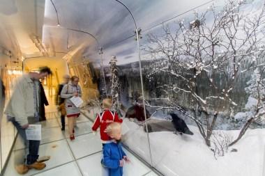 Suomen luontokeskus Haltia. Kuva: Metsähallitus / Jari Kostet