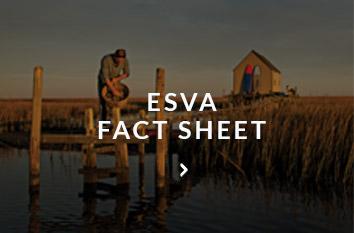 eastern virginia fact sheet