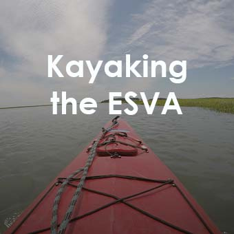 kayaking the eastern shore of virginia
