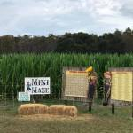 Corn mazes haven't gotten lost amid the pandemic