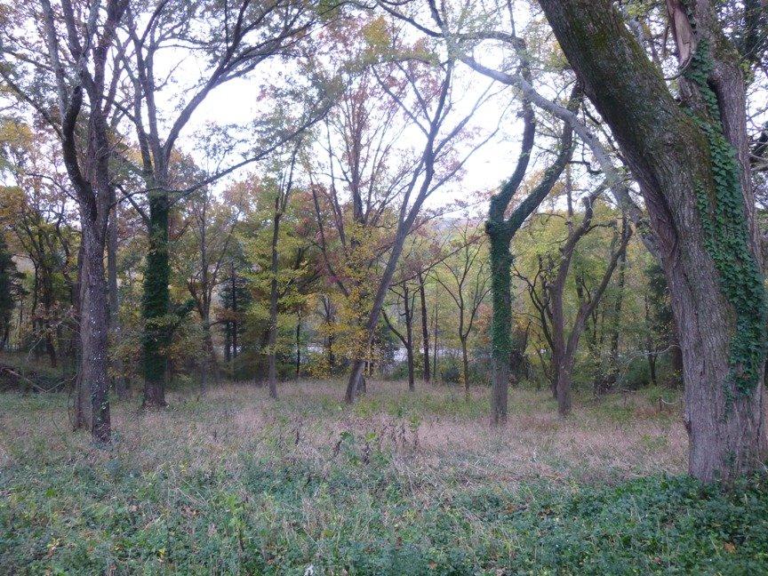 fall blog 6