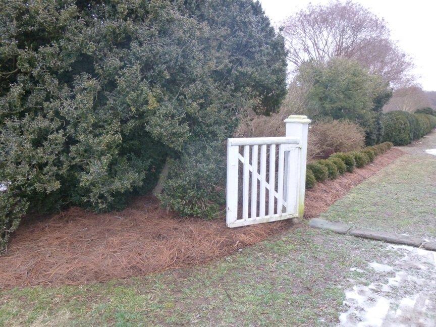 mulch and daff pine straw -r