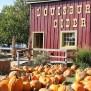 Kansas City S Pumpkin Patches Visit Kc What S