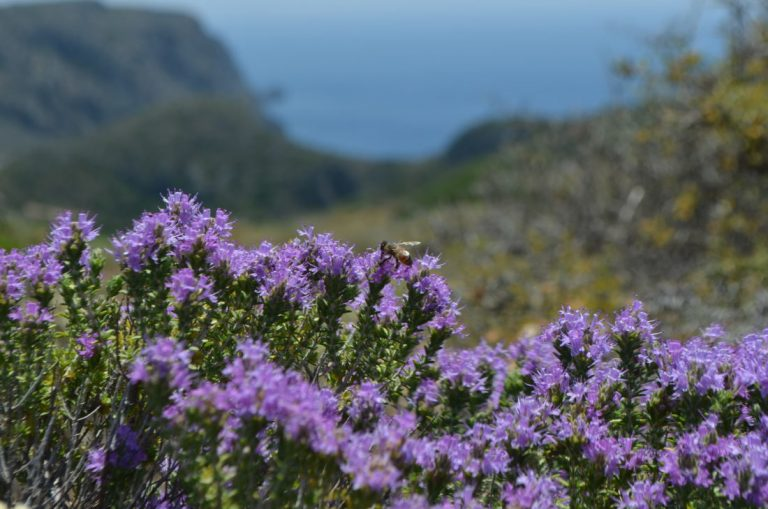 Bees and Thyme
