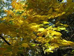 2009/10/29 林城址~あがたの森公園