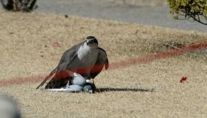 falconry9