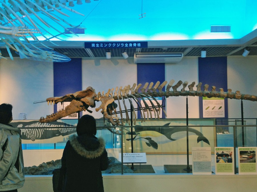 A World of Prehistoric Animals at the Shiga Fossil Museum