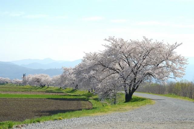 Azusa River Left Bank (Iwaoka Shrine)