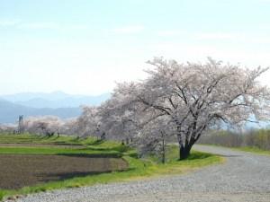 梓川左岸堤防沿い(岩岡神社)