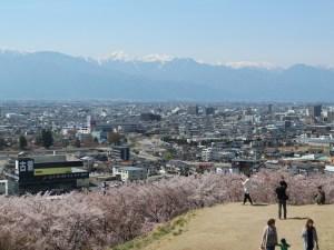 ちょっと郊外のsakuraたち 城山公園・弘法山古墳