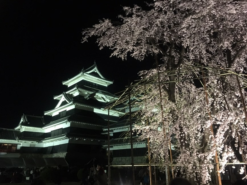 Nighttime Cherry Blossom Viewing