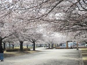 松本市 西南公園