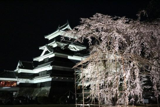 2018-4-4夜桜会1