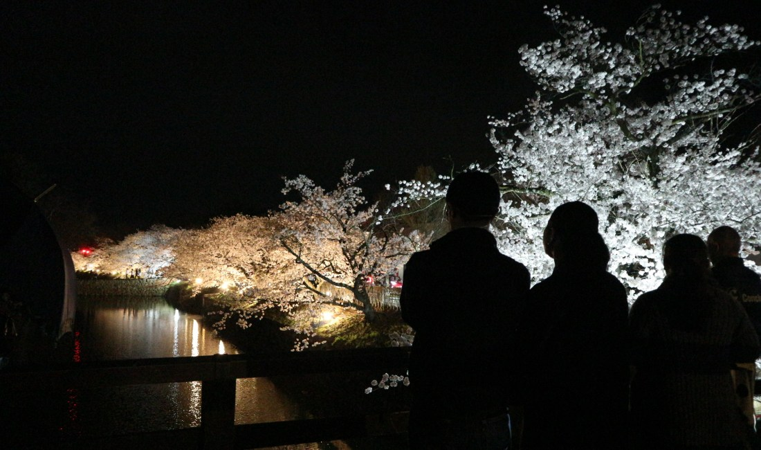 Matsumoto Castle's Nighttime Cherry Blossoms and Other Places Around the City