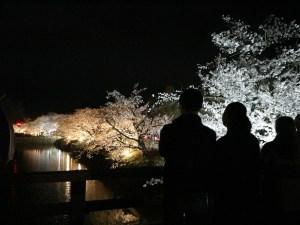 満開の桜を訪ねて朝・昼・夜桜会