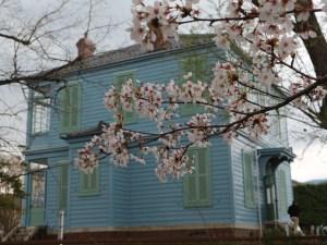 松本城周辺の桜 旧開智学校・旧司祭館など