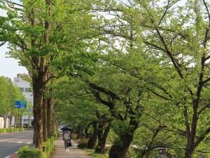 GWまじか松本市街地新緑・花