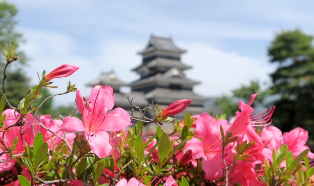 May Blooms at Matsumoto Castle