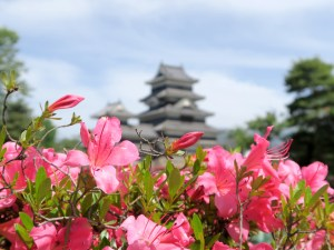 May Blooms at Matsumoto Castle