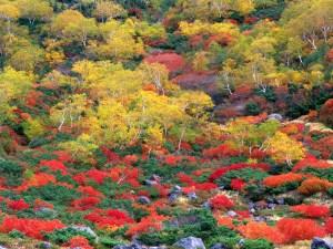 Норикурадаке гора (Кураигахара -  водопады Санбондаки)