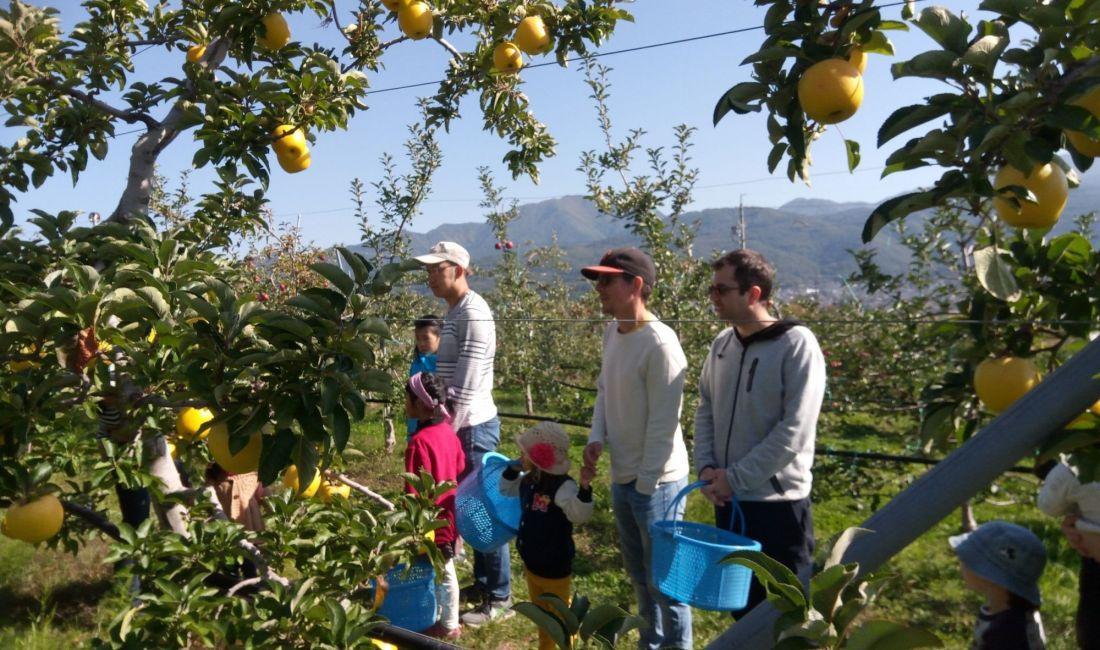 À la découverte des pommes de la ferme Yokoya!
