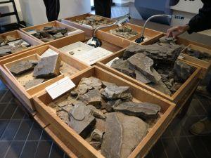 四賀化石館夏休み企画 「さわって・さがして・化石の魅力」