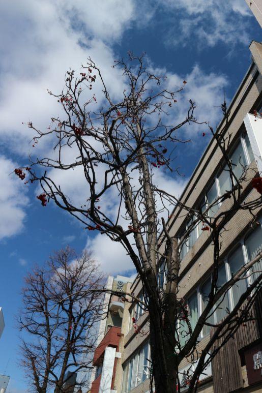 都市デザインツアーナナカマド木