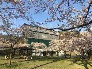 松本市営球場の桜の花も🌸満開
