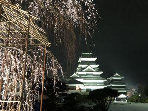 白雪、蓝天、嫩绿、樱红下の松本城(4月4~18日)