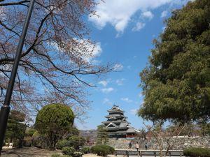 松本城公園のソメイヨシノも咲き始めました。2019/04/08