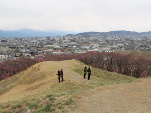 弘法山古墳のヒガンザクラ満開!上部はこれから!