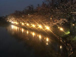 松本城夜桜会&光の回廊始まりました!2019/04/10
