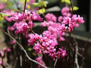 芽吹き花咲く五月 四柱神社周辺の木々花々
