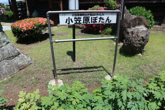 小笠原牡丹2
