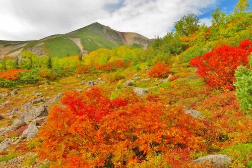 乗鞍岳山頂方面の紅葉は、今週~次の週末がピークです!!