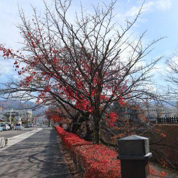 松本城外堀2019-11-18
