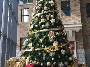 Рождественские Ёлки Мацумото