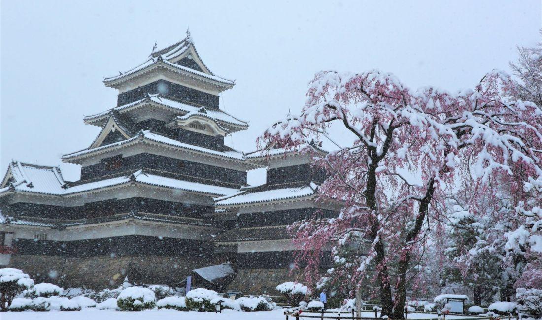 国宝松本城 春の雪と桜
