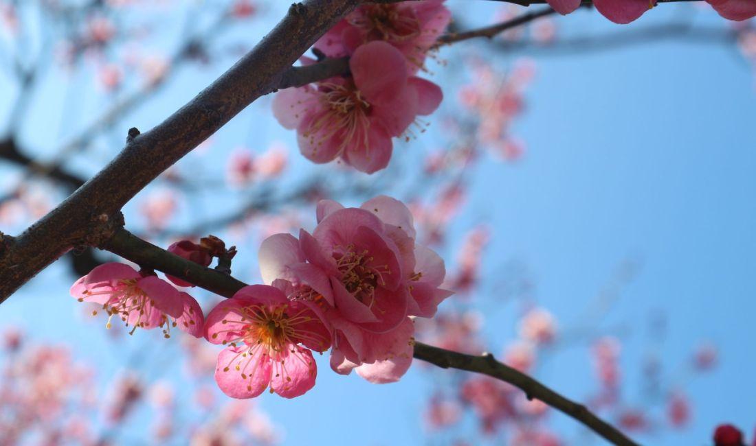 松本スケッチ3月 月・城・梅・桜はまだまだ硬いつぼみ