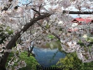 国宝松本城総掘り・北門の大井戸🌸