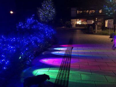 五颜六色的光洒在小广场上,狗狗也有些好奇