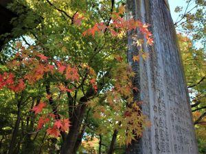 街中も紅葉が始まりました。四柱神社