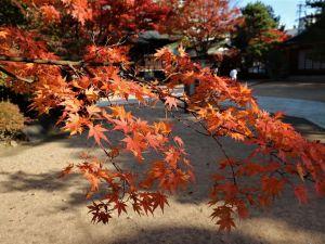 四柱神社 木々が美しく色づいています。