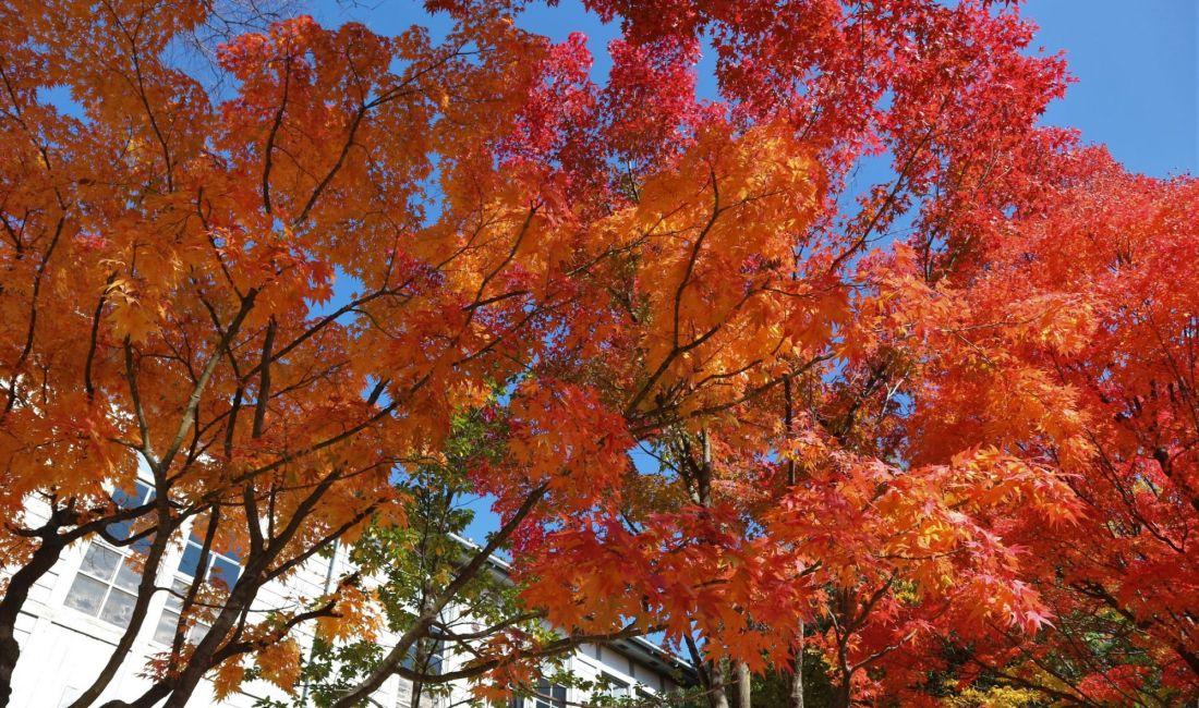 紅葉真っ盛り あがたの森公園 2020/11/05