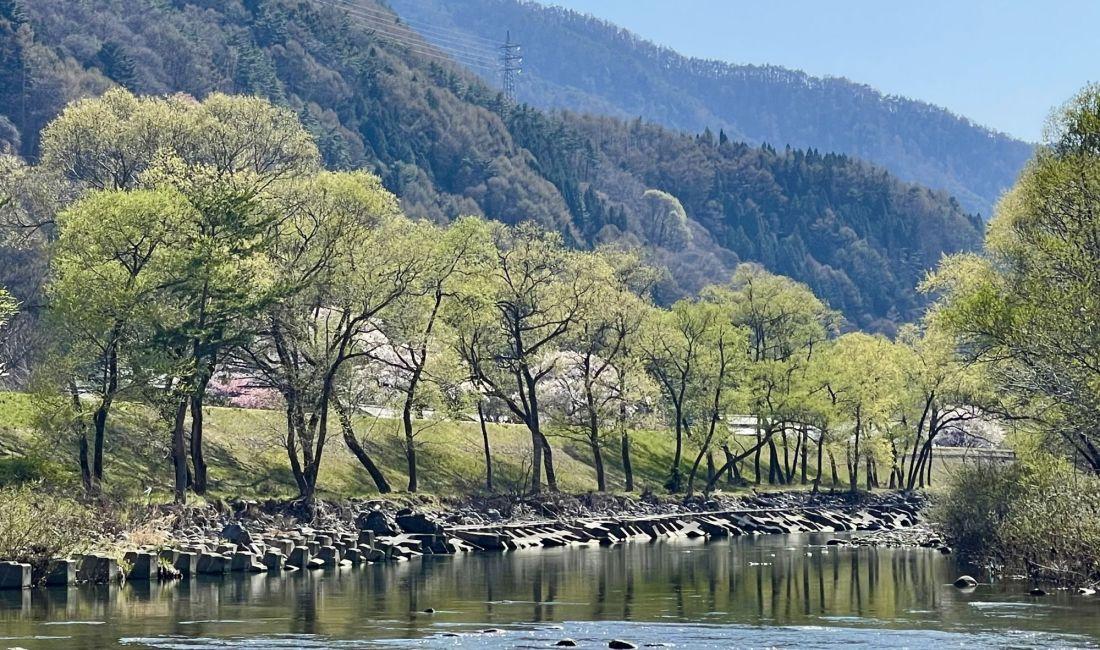 新緑の季節になりますね 梓川