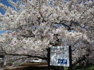 松本市総合体育館・キッセイ文化ホール周辺????情報 2021/04/06