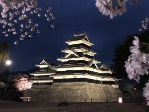 Night Cherry Blossom@ปราสาทมัตสึโมโต้