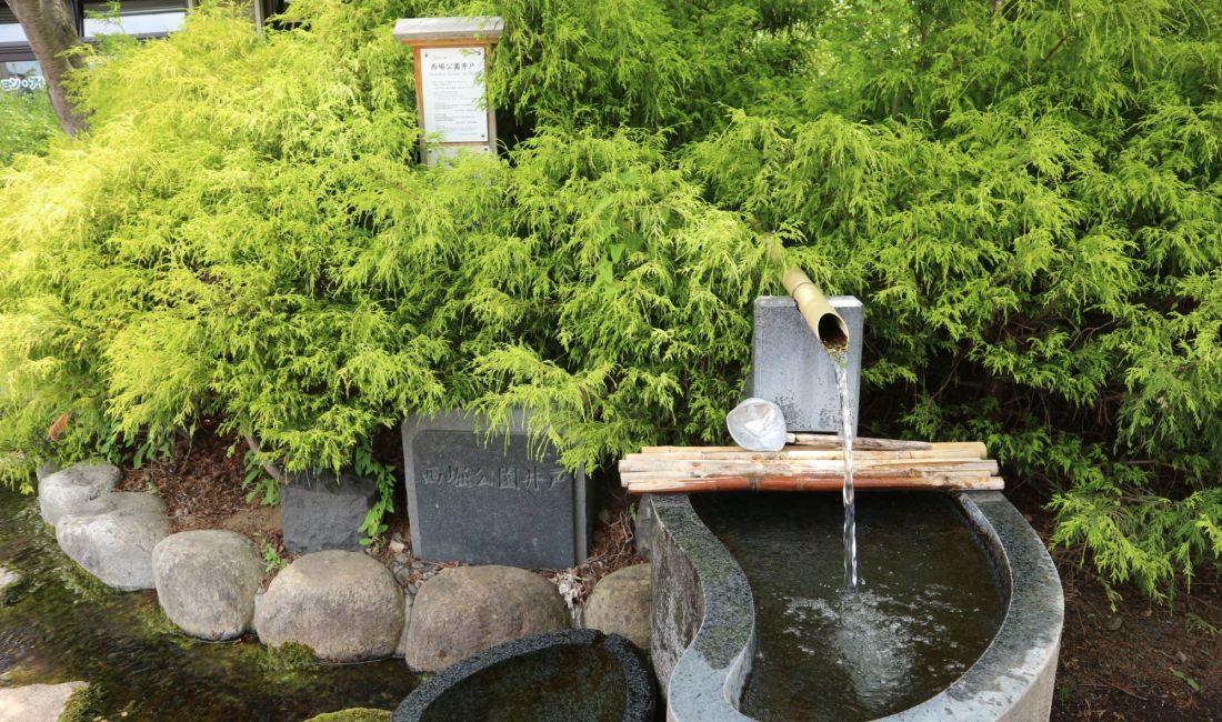 まつもと湧水巡り「西堀公園井戸」ヤマボウシの白い花が咲いています。
